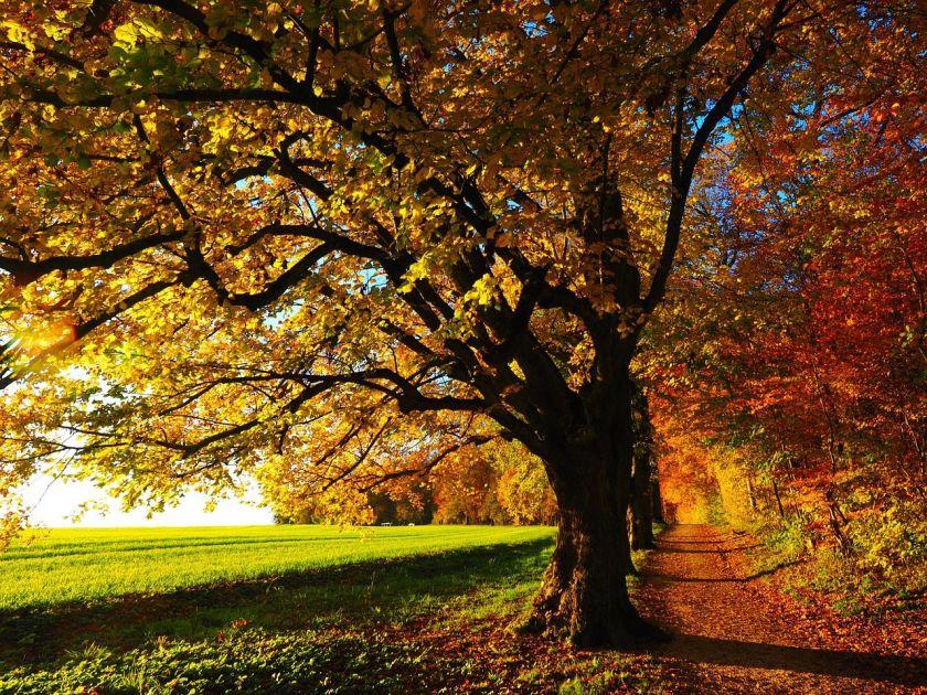 tree-779827_1280g